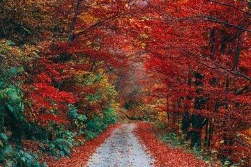 meilleur activités à faire a l'automne