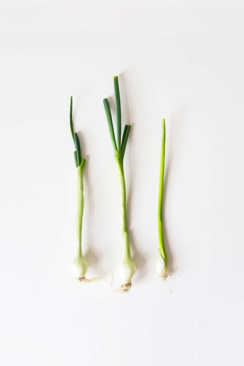 Comment Cultiver Les Oignons comment faire pousser des légumes à partir de restes de table