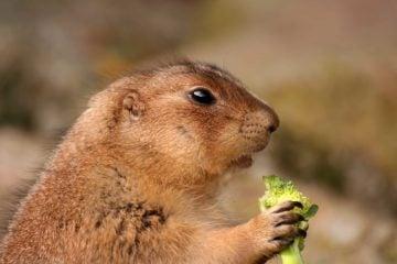 Salade croquante au brocoli ramen, salade végétarienne