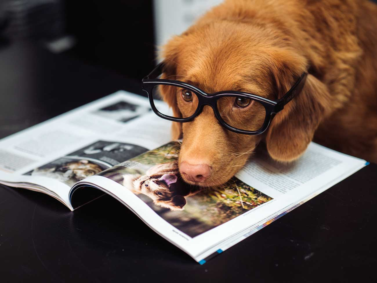 Top-10-Dog-Breeds-beauty